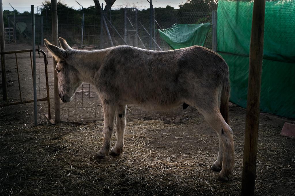 Dying Horse Nerja, Spain