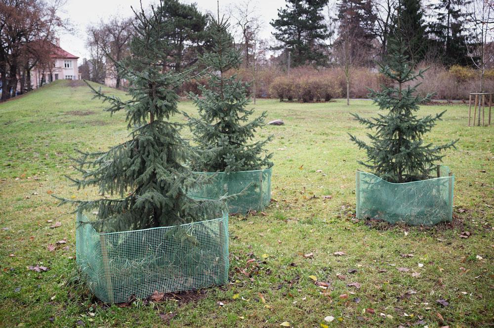 3-trees-Poland
